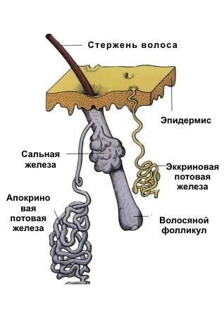 hyperhydrosis2